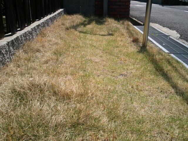 メンテを怠った芝生